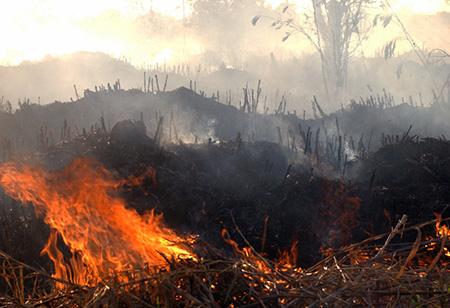 Regenwald-Feuer_AgenciaBrasil