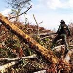 Italienische Satelliten im Einsatz gegen Abholzung des Amazonas-Regenwaldes