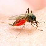 Amazonasregion vereint 99 Prozent aller Malariafälle Brasiliens