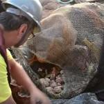 Entdeckung: Amazonasfluss mündet in ein Korallenriff von der Größe Zyperns