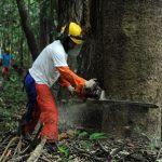 WWF kritisiert Schwund von Schutzgebieten in Amazonas-Regenwald