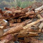 Staatliche Großbauprojekte treiben illegale Kahlschläge in die Höhe