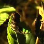 Im Regenwald leuchtende Höhlen und Termitenhügel ziehen Forscher an