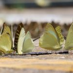 Schmetterlingswolken geben Rätsel auf