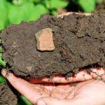 Forscher wollen Geheimnis schwarzer Erde enträtseln