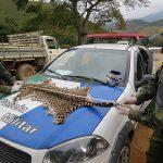 23,3 Millionen Säugetiere und Reptilien in Amazonas-Regenwald erlegt