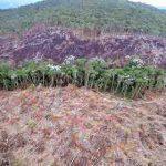 Amazonas-Regenwald verliert 6.207 Quadratkilometer