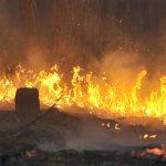 Erhöhte Brandzahl in Amazonasregion