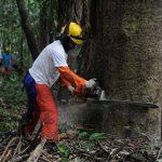 Amazonas-Regenwald fällt weiter Kettensägen zum Opfer