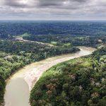 Amazonas-Regenwald: Forscher bestimmen 6.727 Baumarten