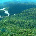 Forscher protestieren zum Tag Amazoniens