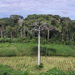 Brasilien verzeichnet 6.624 Quadratkilometer Kahlschläge