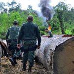 Amazonas-Schutz: Mit hochauflösenden Satellitenbildern kriminelle Machenschaften bekämpfen