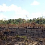 Amazonas-Regenwald kurz vor dem Umkippen