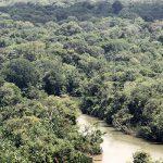Kolumbien: Oberstes Gericht gewährt Amazonas-Regenwald Bürgerrechte