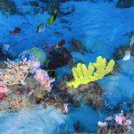 Amazonas-Korallenriff durch Erdölförderung gefährdet
