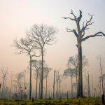 Peru holzt jährlich 123.000 Hektar Regenwald ab