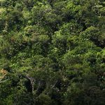 Amazonas-Regenwald Wiege der Artenvielfalt Lateinamerikas