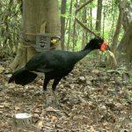 """""""Big-Brother"""" hilft bei Erforschung des Amazonas-Regenwaldes"""