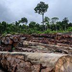Kahlschläge im Amazonas-Regenwald erhöhen Malaria-Risiko