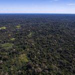 Fonds zum Schutz des Amazonas-Regenwaldes im Mittelpunkt von Kritik und Lob