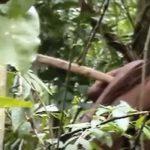 Behörde veröffentlicht Video von isoliert lebenden Indio