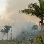 Forscher warnen vor Anheizung des Klimawandels durch schrumpfenden Amazonas-Regenwald