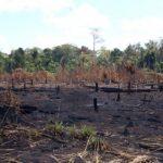 Indios Amazoniens haben vor 4.500 Jahren Regenwald mit nachhaltiger Landwirtschaft geprägt