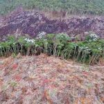 Peru: 20.000 Luftbilder zeigen Zerstörung des Amazonas-Regenwaldes durch Goldabbau