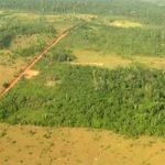 Umweltinstitut: Kahlschläge im brasilianischen Amazonas-Regenwald nehmen zu