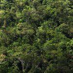 Forscher erstaunt: In Amazoniens Feuchtgebieten wachsen 3.615 Baumarten