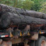 Brasilianischer Präsidentschaftskandidat will Amazonas-Regenwald ausbeuten