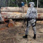 Regenwaldabzolzung: Militär soll Umweltbehörden gegen Attacken schützen