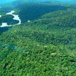 Wirtschaftsexperten errechnen Wert des Amazonas-Regenwaldes
