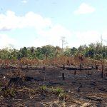 """""""Schwarze Erde"""" Amazoniens soll Landwirtschaft verbessern und Kahlschläge verhindern"""
