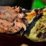 Forscher entdecken 300 neue Tier- und Pflanzenarten im Amazonas-Regenwald Brasiliens