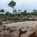 Südamerikanische Länder stehen bei Rodungen von Urwäldern weltweit an Spitze