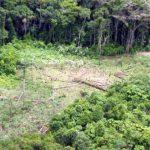 Kahlschläge erhöhen Temperatur Amazoniens