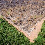 Freihandelsabkommen zwischen EU und Mercosur: Fluch oder Segen für Amazonas-Regenwald?