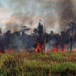 Nach Protesten: Militäreinsatz zur Bekämpfung von Großbränden in Brasiliens Amazonas-Region