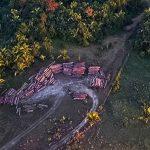 Amazonas-Regenwald benötigt sieben Jahren, um sich von Brand zu erholen