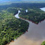 """Bio-Ökonomie und """"Amazônia 4.0"""" wollen Regenwaldschutz und Fortschritt vereinen"""