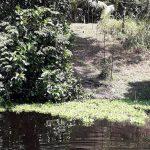 Amazonas-Regenwald: Forscher entdecken mehrere Jahrhunderte alte, künstlich angelegte Inseln