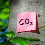 Internationale Studie belegt: Amazonas-Regenwald ist zur Kohlendioxidquelle geworden