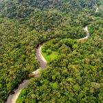 Spuren von 10.000 Jahre alter Landwirtschaft im Amazonas-Regenwald Boliviens entdeckt