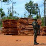 Steigende Regenwaldzerstörung: Unternehmer und Agro-Industrie fordern Maßnahmen