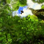 Forscher entdecken weitere Baum-Giganten im Amazonas-Regenwald