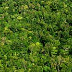 Acht Unternehmen adoptieren Naturschutzgebiete Amazoniens