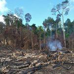 Regenwaldzerstörung nimmt weiter zu – Experten fordern automatische Ahndung
