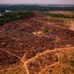 Amazonas-Institut Imazon schlägt Alarm: Pro Stunde werden 1,2 Quadratkilometer Regenwald abgeholzt